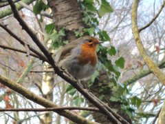 Rock Climbing Photo: British Robin