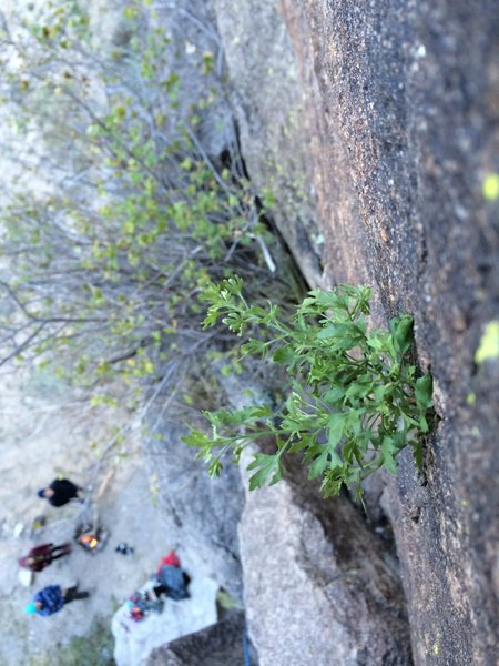 A neat bush next to a trad route in Rainbow Canyon
