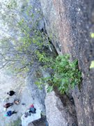 Rock Climbing Photo: A neat bush next to a trad route in Rainbow Canyon