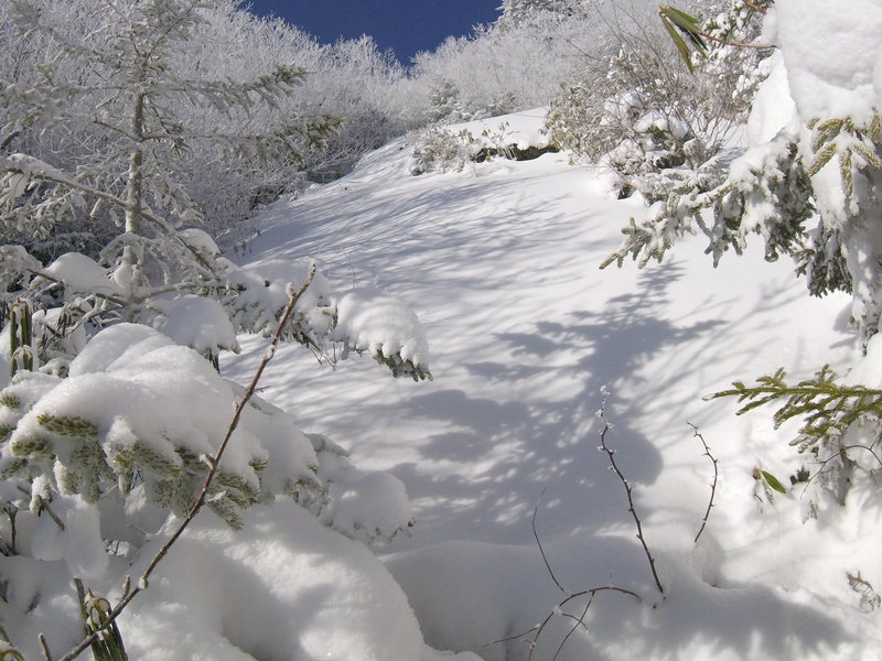The top of the gully near the start of shwacking