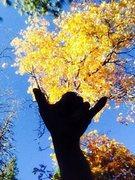 Rock Climbing Photo: Autumn gnar!!!