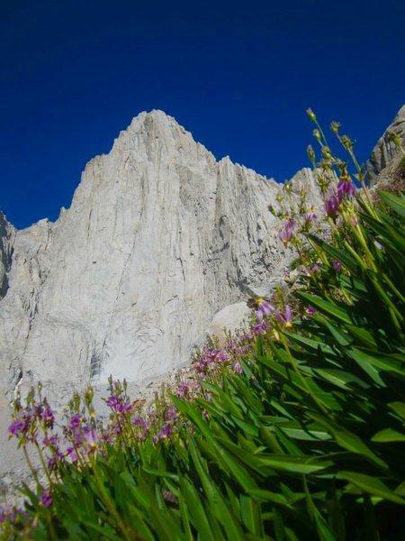 Rock Climbing Photo: Alpine flora!!!