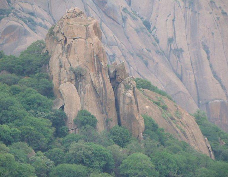 Banyan Tree Pillar. <br> <br> Photo: Bangalore Climbing Initiatives