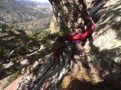 Rock Climbing Photo: Tree atop P2 of Point Break. I cut off 7 ratty sli...