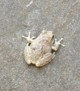 Rock Climbing Photo: Saw this little guy hanging out at the base of Sou...