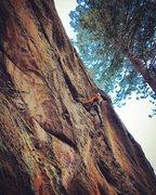 Rock Climbing Photo: Glen outsmarting the Gruffalo.