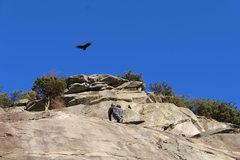 Rock Climbing Photo: climbing on yonah with the  birds