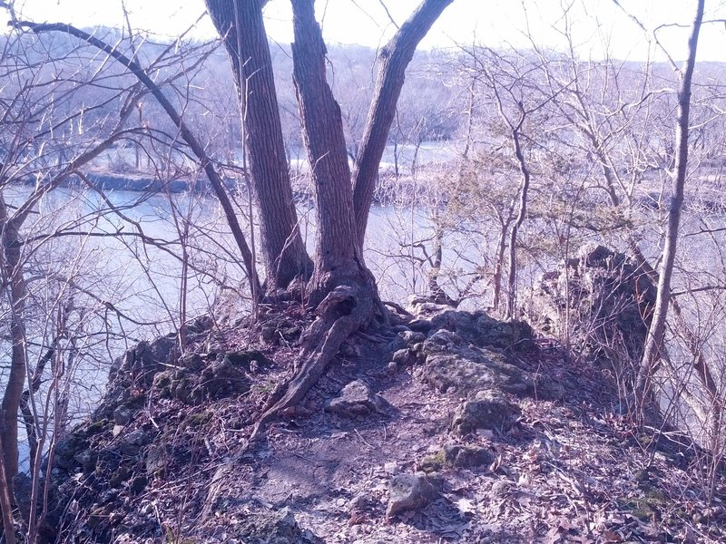 The two stemmed dead tree that marks the top of this area can be seen from the hiking trail.