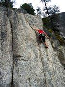 Rock Climbing Photo: Pine Cones