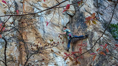 Rock Climbing Photo: Dave Coleman on instant karma direct.