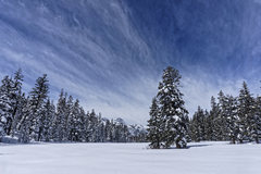 Rock Climbing Photo: Agnew Meadow in winter with Ritter and Banner behi...