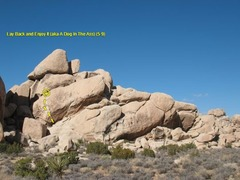 Rock Climbing Photo: Lay Back and Enjoy It (aka A Dog In The Ass) (5.9)...