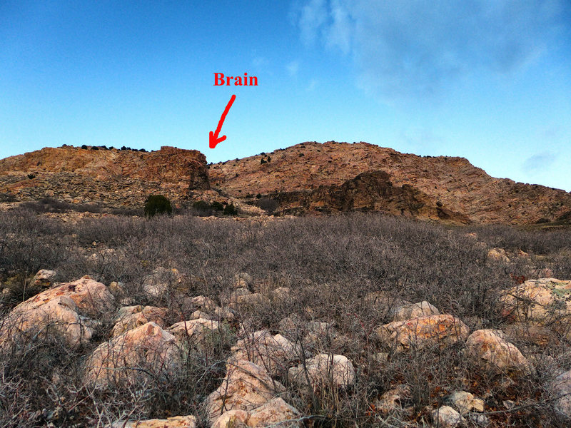 Brain as seen from the trail.
