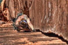 Rock Climbing Photo: Tom Cat, 5.10, Indian Creek