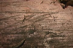 Rock Climbing Photo: marks from glacial movements can be seen all along...