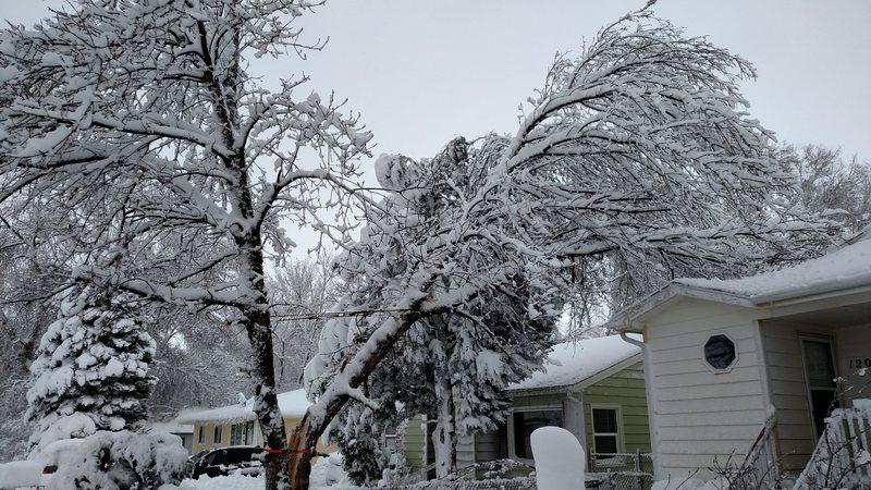Tree split