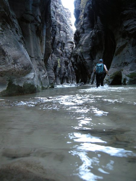 Virgin River Narrows. Zion N.P.