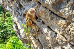 Rock Climbing Photo: monkey1