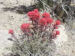 Rock Climbing Photo: After El Niño the hills are alive with wild flowe...