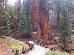 Rock Climbing Photo: Hiking the Congress Trail - Giant Forest - Sequoia...