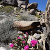 Desert blooms 8)