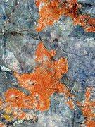 Rock Climbing Photo: Colorful lichen, White Mountains
