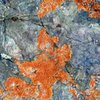 Colorful lichen, White Mountains