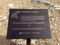 Rock Climbing Photo: Patriarch Grove signage, White Mountains