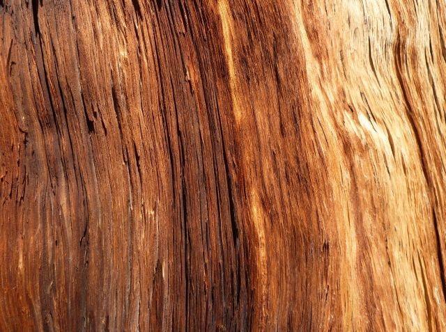 Bristlecone bark detail, White Mountains