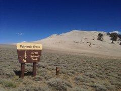 Rock Climbing Photo: Patriarch Grove sign, White Mountains