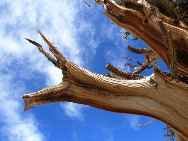 Rock Climbing Photo: Two point buck, White Mountains