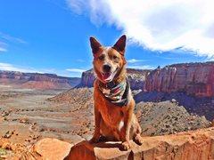 Rock Climbing Photo: My crag pup