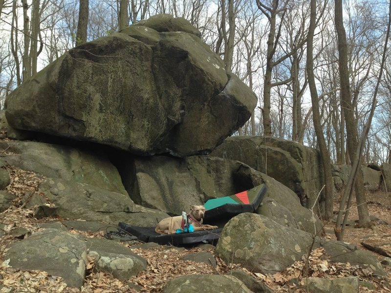 """""""rubbing the nubbin"""" (V5), with olive the dog."""