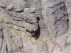 Rock Climbing Photo: free soloing below Harney peak sd