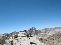 Rock Climbing Photo: Mt Muir, Whitney, and Russell.