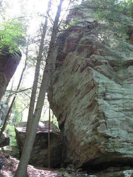 Rock Climbing Photo: Falling Tree Arete