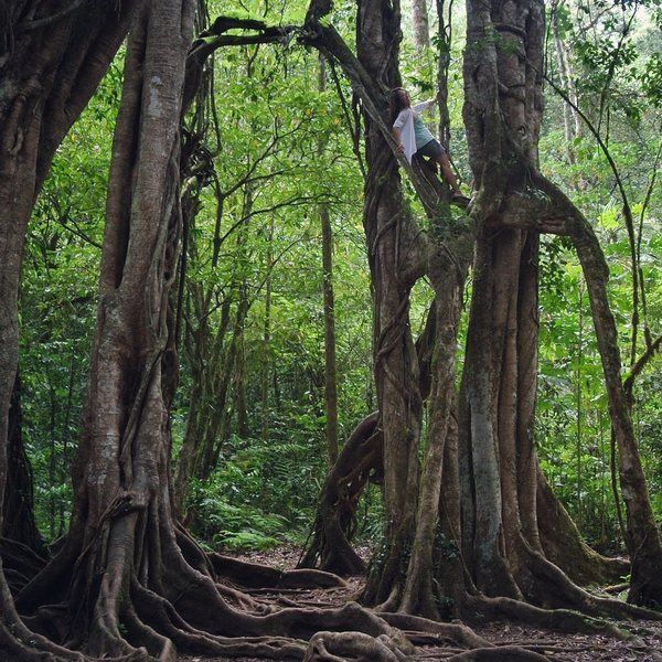 Rock Climbing Photo: tree climbing in Bali