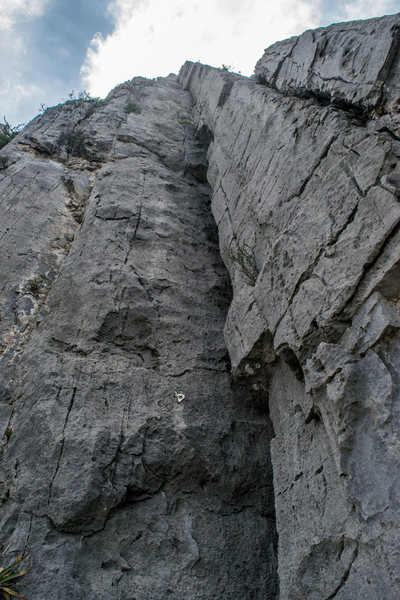 The whole reason you're climbing this route: looking up the 35 meter long dihedral of pitches 5 and 6