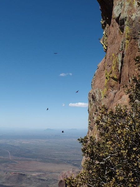 up high on the route with the birds, photo by Kurt Johnson