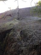 Rock Climbing Photo: Trees-a-crowd