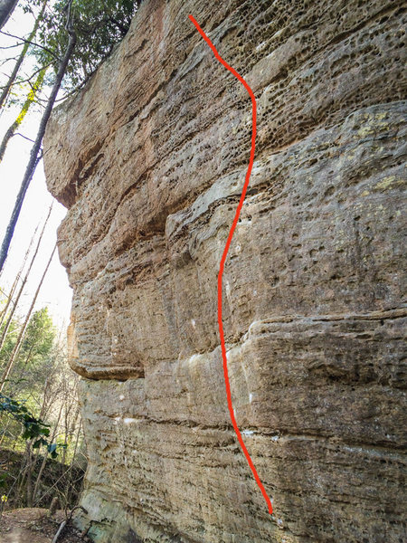 Rock Climbing Photo: Evening Wood line