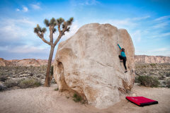 Rock Climbing Photo: Muquxi La jamming on Pinhead boulder - Joshua Tree