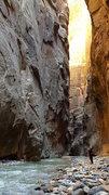 Rock Climbing Photo: The Narrows of Zion