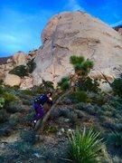 Rock Climbing Photo: saddle rock - tree
