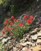 Rock Climbing Photo: Spring!