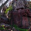Tree ledge buttress