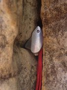 Rock Climbing Photo: Who says there's no pro on the bottom of the route...