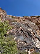 Rock Climbing Photo: Birdland