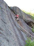 Rock Climbing Photo: Quercus Rubra, P2