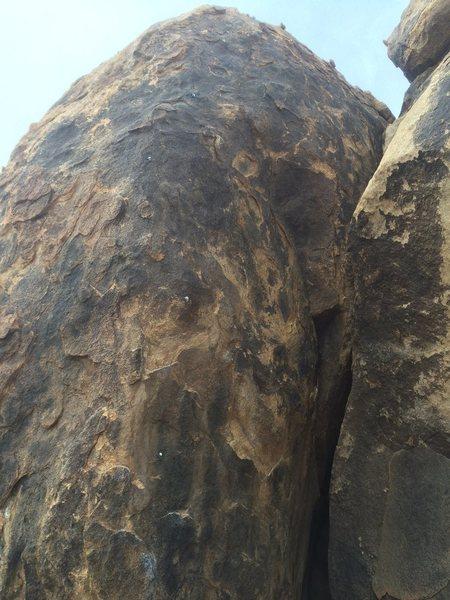 Rock Climbing Photo: King Snake